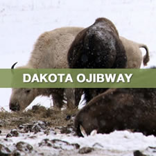 dakota ojibway select thumbnail